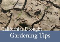 Gardening Tips_Dirt